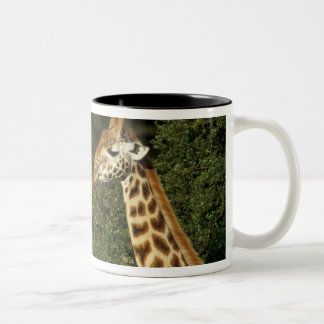 Kenya: Lake Nakuru National Park, Rothschild 2 Two-Tone Coffee Mug