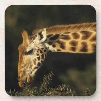 Kenya: Lake Nakuru National Park, Rothschild Coaster