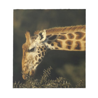 Kenya: Lake Nakuru National Park, Rothschild Notepad