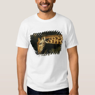 Kenya: Lake Nakuru National Park, Rothschild T-Shirt