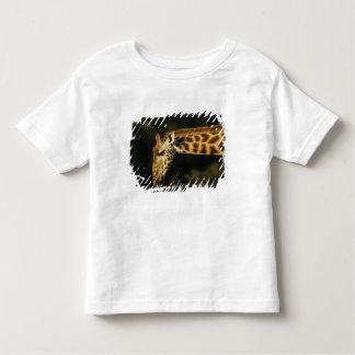 Kenya: Lake Nakuru National Park, Rothschild Toddler T-shirt