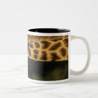 Kenya: Lake Nakuru National Park, Rothschild Two-Tone Coffee Mug