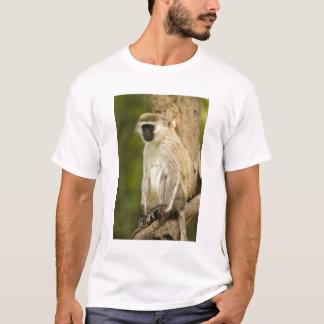 Kenya, Lake Nakuru National Park. Vervet T-Shirt