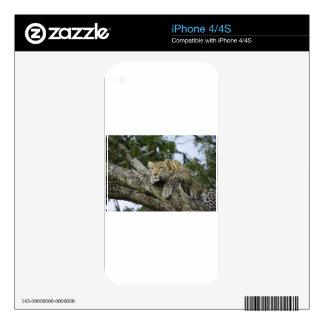 Kenya Leopard Tree Africa Safari Animal Wild Cat Decal For iPhone 4S
