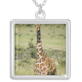 Kenya, Lewa Conservancy, Masai Giraffe standing Silver Plated Necklace