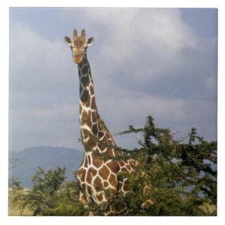 Kenya: Lewa Wildlife Conservancy, reticulated Ceramic Tile