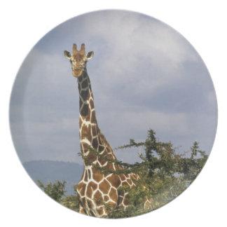 Kenya: Lewa Wildlife Conservancy, reticulated Melamine Plate