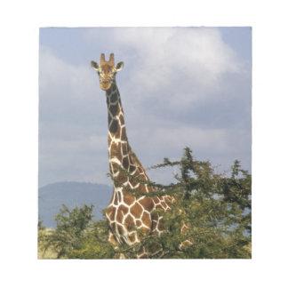 Kenya: Lewa Wildlife Conservancy, reticulated Notepad