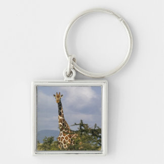 Kenya: Lewa Wildlife Conservancy, reticulated Silver-Colored Square Keychain