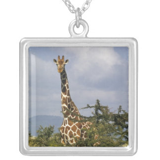Kenya: Lewa Wildlife Conservancy, reticulated Silver Plated Necklace