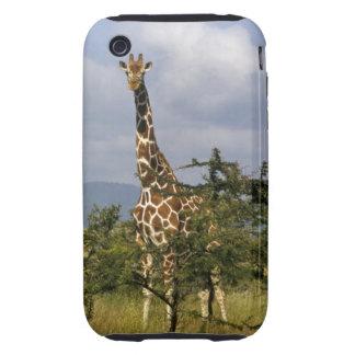 Kenya: Lewa Wildlife Conservancy, reticulated Tough iPhone 3 Case