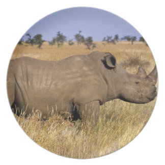 Kenya: Lewa Wildlife Conservancy, white Plate