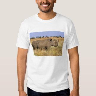 Kenya: Lewa Wildlife Conservancy, white T-Shirt