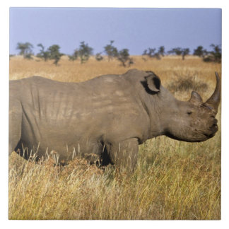 Kenya: Lewa Wildlife Conservancy, white Tile