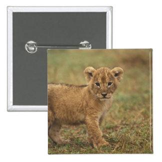 Kenya. Lion Cub (Panthera Leo) Button