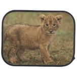 Kenya. Lion Cub (Panthera Leo) Car Mat