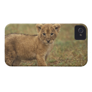 Kenya. Lion Cub (Panthera Leo) Case-Mate iPhone 4 Case