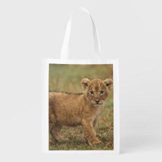 Kenya. Lion Cub (Panthera Leo) Grocery Bag