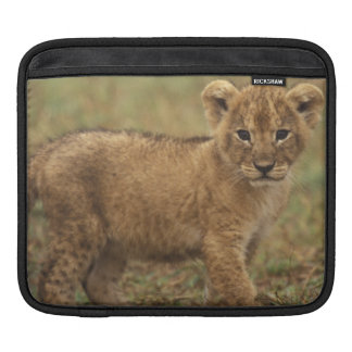 Kenya. Lion Cub (Panthera Leo) iPad Sleeve