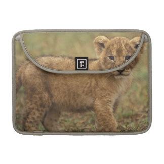 Kenya. Lion Cub (Panthera Leo) MacBook Pro Sleeves