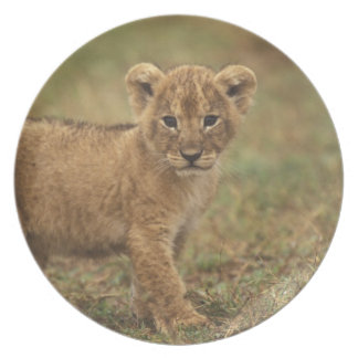 Kenya. Lion Cub (Panthera Leo) Plate