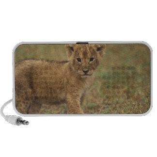 Kenya. Lion Cub (Panthera Leo) Notebook Speaker