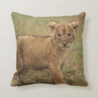 Kenya. Lion Cub (Panthera Leo) Throw Pillow