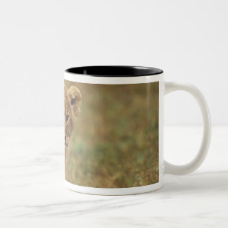 Kenya. Lion Cub (Panthera Leo) Two-Tone Coffee Mug