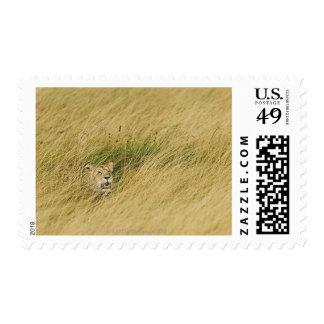 Kenya, Masai Mara 2 Postage