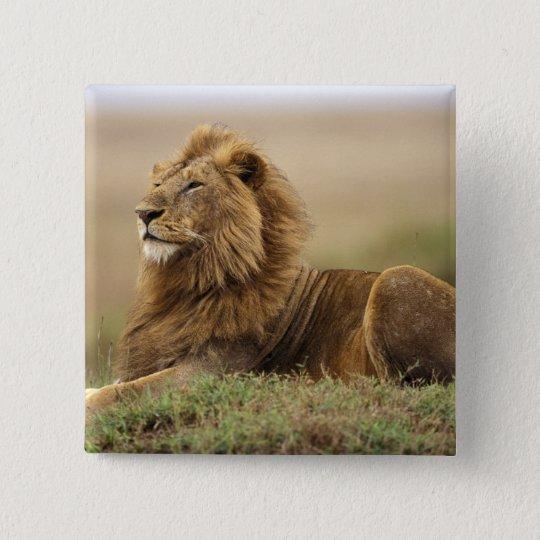Kenya, Masai Mara. Adult male lion on termite Button