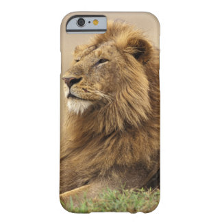 Kenya, Masai Mara. Adult male lion on termite Barely There iPhone 6 Case