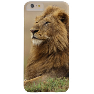 Kenya, Masai Mara. Adult male lion on termite Barely There iPhone 6 Plus Case