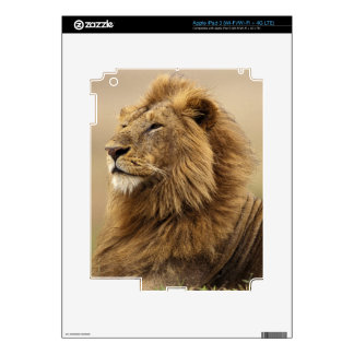 Kenya, Masai Mara. Adult male lion on termite iPad 3 Decals