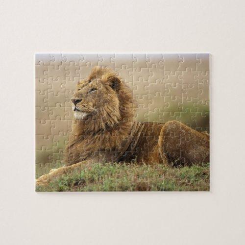 Kenya Masai Mara Adult male lion on termite Jigsaw Puzzle