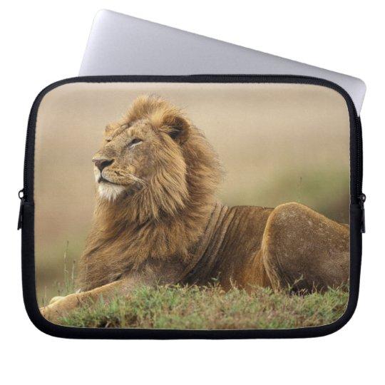 Kenya, Masai Mara. Adult male lion on termite Laptop Sleeve