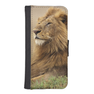Kenya, Masai Mara. Adult male lion on termite Phone Wallet Cases