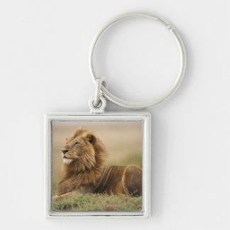 Kenya, Masai Mara. Adult male lion on termite Silver-Colored Square Keychain