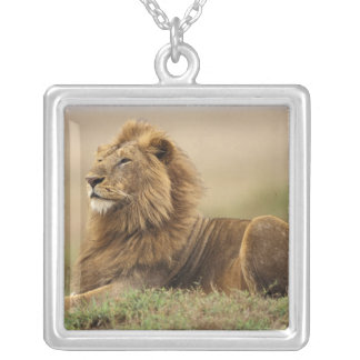 Kenya, Masai Mara. Adult male lion on termite Silver Plated Necklace