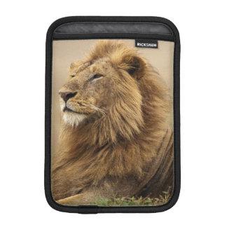Kenya, Masai Mara. Adult male lion on termite Sleeve For iPad Mini