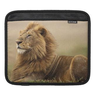 Kenya, Masai Mara. Adult male lion on termite Sleeve For iPads