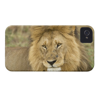 Kenya, Masai Mara. Close-up of lion. Credit as: iPhone 4 Case