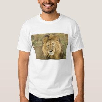 Kenya, Masai Mara. Close-up of lion. Credit as: T Shirt