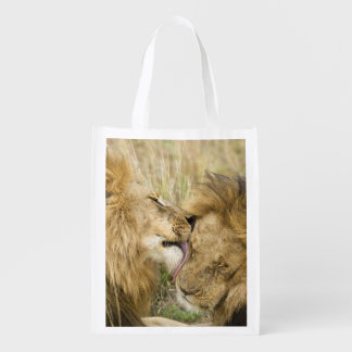 Kenya, Masai Mara. Close-up of one male lion Grocery Bags