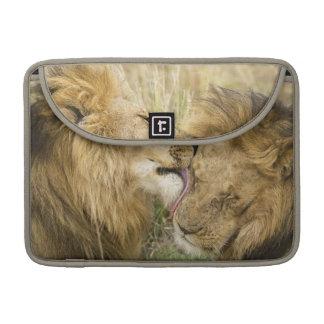 Kenya, Masai Mara. Close-up of one male lion Sleeve For MacBooks