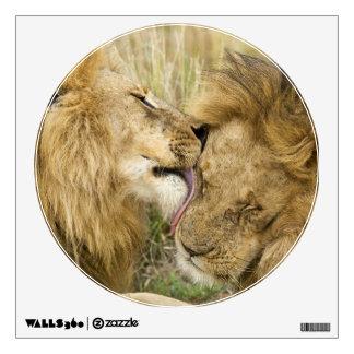 Kenya, Masai Mara. Close-up of one male lion Wall Sticker