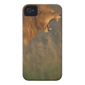 Kenya, Masai Mara Game Reserve, Adult male Lion iPhone 4 Case