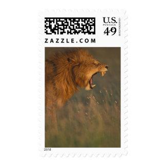 Kenya Masai Mara Game Reserve Adult male Lion Postage Stamps