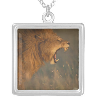 Kenya, Masai Mara Game Reserve, Adult male Lion Silver Plated Necklace