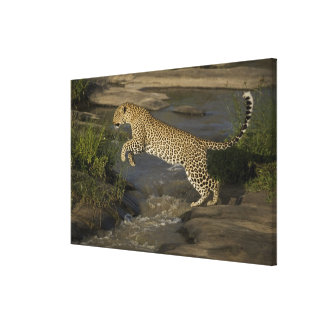 Kenya, Masai Mara Game Reserve. African 2 Gallery Wrap Canvas