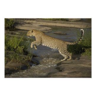 Kenya, Masai Mara Game Reserve. African 2 Photo Print